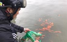 Tiễn Táo Quân về trời, nhiều gia đình đi phóng sinh cá từ sáng sớm