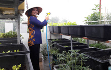 Đã mắt với 2 vườn rau gì cũng có của bà mẹ 8X ở Sài Gòn