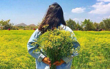 Cánh đồng hoa thì là ở Ninh Thuận vừa mở cửa 4 ngày đã vội vàng đóng cửa do bị khách tham quan giẫm đạp