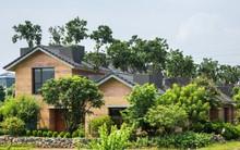 Ngôi nhà không đổ cột bê tông với vườn bưởi trĩu quả trên mái nhà ở Hà Nội