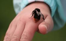 Bị ong đốt cần làm những gì để sơ cứu kịp thời, tránh biến chứng nguy hiểm cũng như nguy cơ tử vong?
