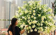 Tháng 4 về, ai cũng dành một góc nhà tinh khôi trong trẻo với hoa loa kèn