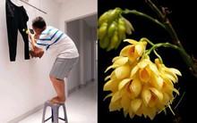 Bức ảnh hoa lan ai nhìn cũng khen, danh tính
