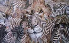 Con vật mà bạn nhìn thấy đầu tiên sẽ giúp bạn khám phá ưu điểm và nhược điểm của bản thân