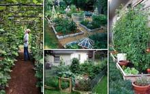 Tham khảo ngay những cách sáng tạo này để biến mảnh đất trống thành vườn rau đẹp mắt