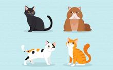 Nếu vẫn chưa biết mẫu người lý tưởng của bản thân, hãy thử chọn cho mình một chú mèo mà bạn thích nhất