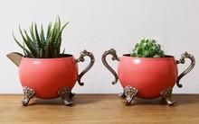 Gợi ý trồng cây, trồng hoa siêu ngọt ngào trong bộ ấm chén, bạn đã sẵn sàng để đón mùa xuân?