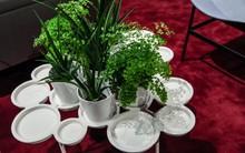 Gợi ý những mẫu thiết kế chậu cây xanh trong nhà cho những người yêu thiên nhiên