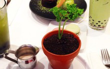 Mới nhìn cứ nghĩ đây là chậu cây, hóa ra lại là món ăn độc đáo ở New York