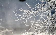 Thời tiết lạnh giá, người dân Nhật Bản háo hức chiêm ngưỡng khung cảnh