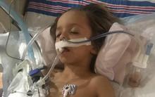 Tò mò chạm vào con dơi ngoài vườn, cậu bé 6 tuổi bất ngờ qua đời sau vài ngày