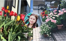 Nàng dâu Việt ở Nhật chỉ cách trồng tulip từ đất để hoa nở rực rỡ đón Tết