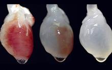Xem quá trình tạo ra quả tim đập
