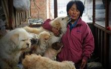 Chi hơn 23 triệu đồng cứu chó khỏi bàn nhậu