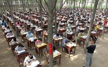 Nhà trường tổ chức cho học sinh thi cuối kỳ ở giữa rừng cây để... tránh nóng