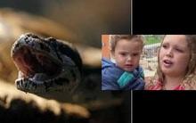 Cậu bé 1 tuổi cắn chết... rắn hổ mang