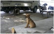 Câu chuyện đáng thương về chú chó nhỏ bị chủ
