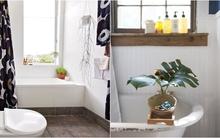 Những biện pháp cải tạo đơn giản cho phòng tắm không còn buồn tẻ