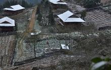 Quảng Ninh: Gần 300 gia súc, hơn 5 tấn cá chết vì rét đậm