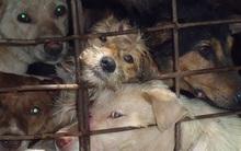Rơi lệ khi xem Clip giết mổ, trộm cắp chó ở Việt Nam