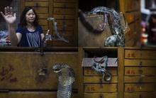 Khám phá những cửa hàng rắn truyền thống ở Hồng Kông