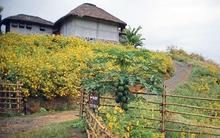 Pai - thị trấn đáng yêu của Thái Lan rực rỡ trong mùa hoa dã quỳ