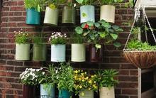 Những khu vườn thẳng đứng vừa tiết kiệm diện tích vừa hiệu quả cao cho nhà phố