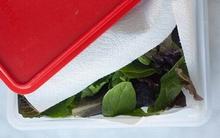 3 cách giữ rau tươi lâu hơn 1 tuần cực kỳ đơn giản