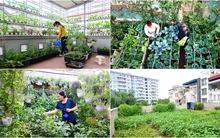 4 vườn rau trên sân thượng ở Hà Nội khiến chị em mê tít