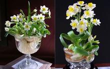 6 loài hoa đẹp và ý nghĩa dành cho phòng khách dịp Tết đến Xuân về