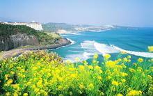 Đến Hàn Quốc lúc này, bạn sẽ được đắm chìm trong những mùa hoa đẹp ngất ngây