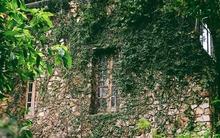 Khu vườn 800m² đẹp ngất ngây với 75 loại hoa hồng ở gần Hà Nội