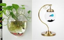 Những mẫu bể cá treo mini đẹp hút hồn cho nhà nhỏ