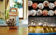 3 cách trồng nấm siêu nhanh để gia đình có nấm ăn trong dịp Tết