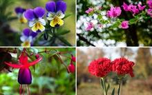 14 loại hoa tuyệt đẹp thích hợp trồng để khoe hương sắc dịp xuân hè