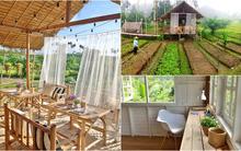 Cận cảnh trang trại với vườn rau xanh mướt mát đang khiến cư dân mạng điên đảo