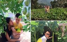 Thích thú với những vườn rau xanh mướt mắt của nhà sao Việt