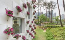 Túi trồng cây kiêm trang trí tường - giải pháp cho nhà không có chỗ trồng cây