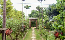 Lạc vào vườn hồng rộng 1300m² ngập tràn sắc hoa lãng mạn và yên bình ở Hà Nội