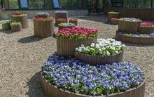 11 ý tưởng tuyệt vời để biến khu vườn nhà bạn đẹp lên trong nháy mắt