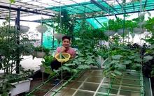 Vườn rau xanh đẹp đến khó tin trên mái nhà của nhà thiết kế áo dài nổi tiếng Việt Nam