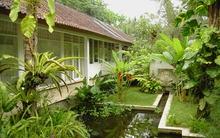 Ngôi nhà nằm trọn giữa thiên nhiên xanh mát khiến bạn cảm giác như đang ở... thiên đường