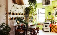 Cô nàng người mẫu 8x biến căn hộ của mình thành khu vườn khổng lồ với hơn 150 loại cây