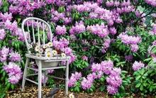 Trang trí vườn nhà với những ý tưởng chỉ người thông minh mới nghĩ ra