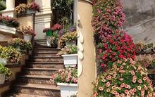 Choáng ngợp với căn biệt thự sở hữu hơn 100 chậu hoa triệu chuông nở rực rỡ Quảng Ninh