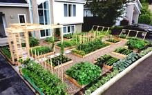 Dùng khung gỗ trồng rau, giải pháp giúp vườn vừa gọn gàng vừa ấn tượng