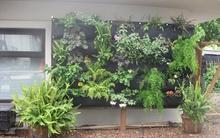 Không cần vườn rộng, chị em vẫn có rau sạch ăn quanh năm với cách trồng này