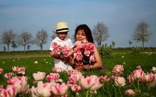 Khu vườn tràn ngập sắc hoa, đẹp như bước ra từ truyện cổ tích của mẹ Việt ở Hà Lan