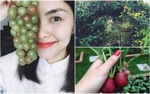 Khu vườn êm đềm ngập tràn hoa quả tươi của gia đình Hà Tăng