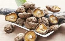 6 loại nấm có ích nhất cho sức khỏe